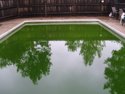 Algues piscine for Algue verte piscine