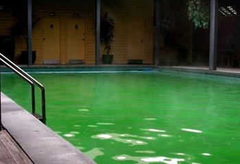 eau-verte-piscine