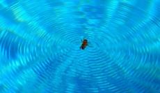Comment éliminer les insectes en bord de piscine ?